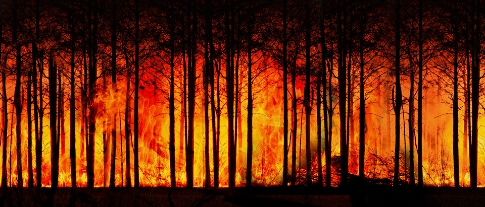 Forest-Fire-1